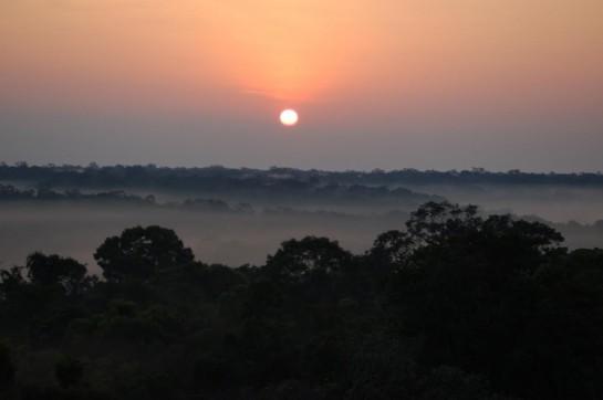 Amazonian Tropical Rain forest